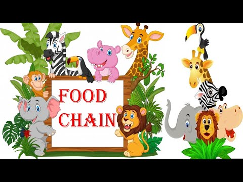 FOOD CHAIN || FOOD WEB || ENERGY PYRAMID || SCIENCE EDUCATIONAL VIDEOS FOR KIDS