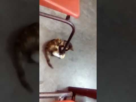 Cat playing .. A must watch..