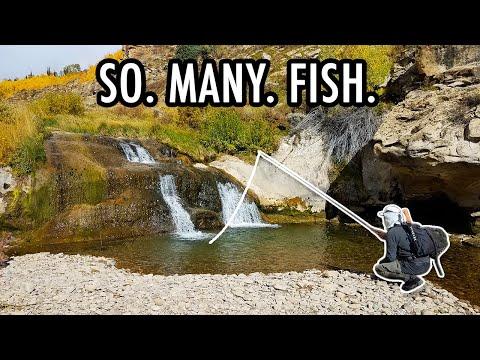 I've Never Seen So Many Fish In A Creek! (Tenkara Fly Fishing Adventures)