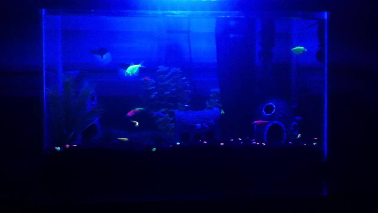 Glofish Tank 10 Gallon GloFi...