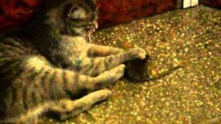 игра с ужином (кошки-мышки в аптеке)