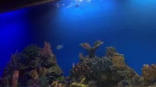Sleeping with the fish! | Hotel H20 Manila