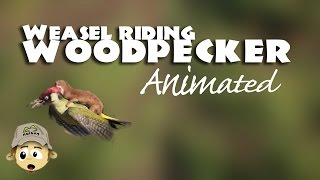 Weasel riding Woodpecker -  Animated