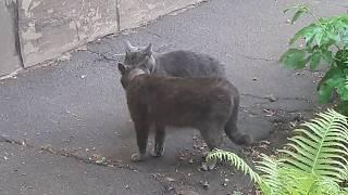 Говорящие Коты : Так это они на грузинском говорят? Драка котов