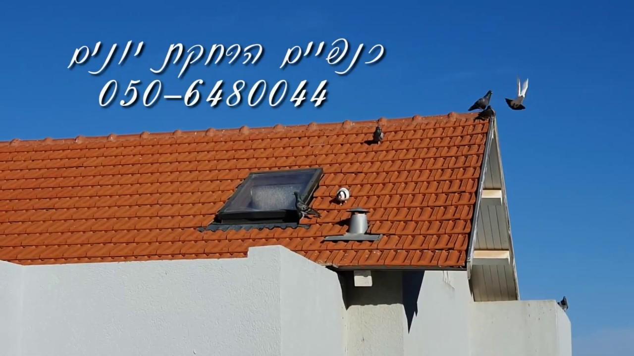 הרחקת יונים מגג רעפים בצופים - כנפיים הרחקת יונים
