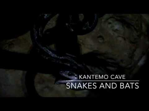 Cave of Kantemo - Snakes and bats in Yucatan