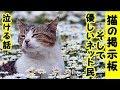 👀【感動 泣ける話】交通事故・ある猫の掲示板・悲しみ傷ついた投稿者さんと優しいネット民の声(猫 感動 �