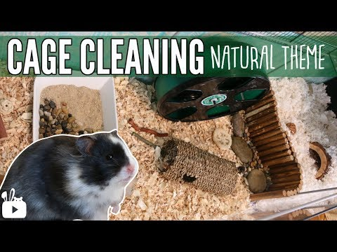 CLEANING MY HAMSTERS CAGE & cage tour!