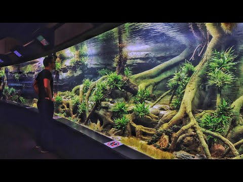 MONSTER Planted Aquascape in German Zoo - Full Tour