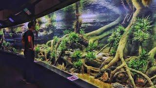 EPIC 7500 gallon Aquascape - The Biggest Planted Aquarium in Germany 🇩🇪 💚