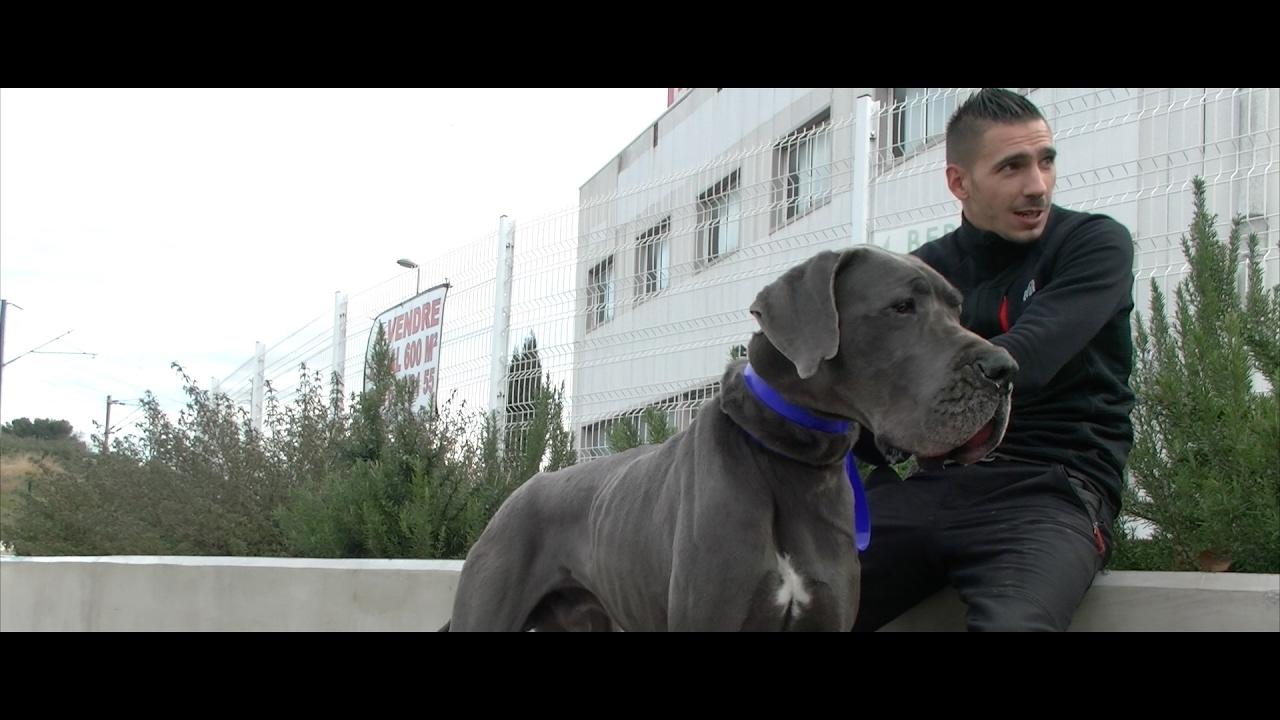 jewell dogues allemands sans famille formation sym dog 2017 youtube. Black Bedroom Furniture Sets. Home Design Ideas