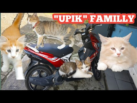My beloved tabby cat is playing on the motorbike