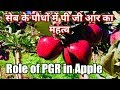 Role of Plant Growth Regulator in apples