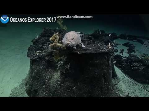 Okeanos unnamed seamount in the Phoenix Islands Protected Area