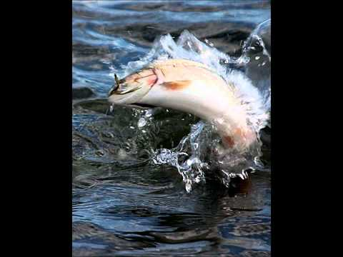 Franz Schubert - The Trout (complete)