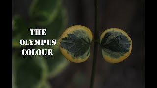 How to get Olympus Colour & Look / Best Camera Settings for Olympus OMD&PEN