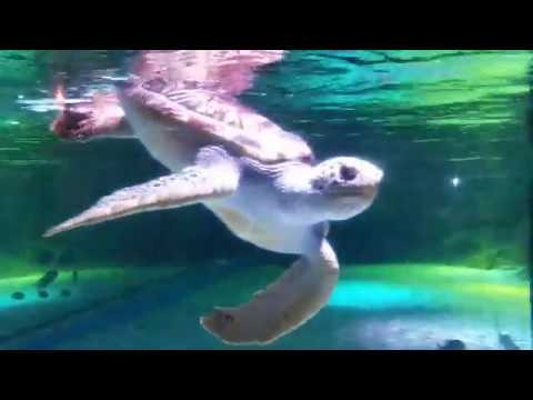 sea-life-bangkok-ocean-world