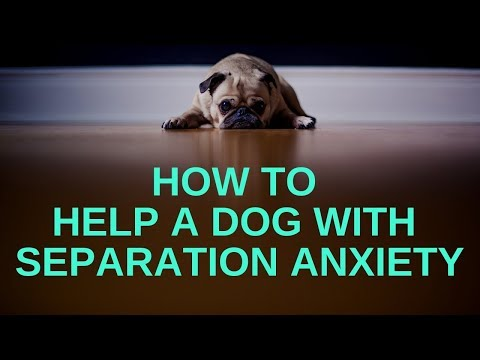 How To Help A Dog With Separation Anxiety : 10 Tips To Stop Separation Anxiety In Dogs!