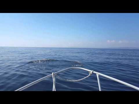 Bass Strait - Devonport Tasmania