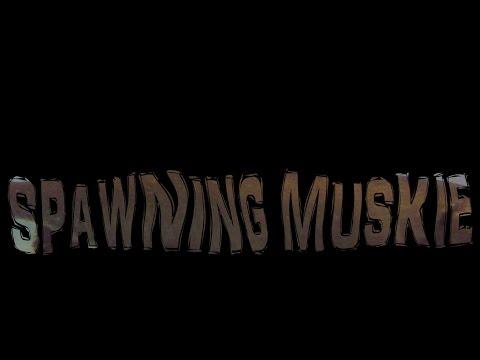 Spawning Muskies - 2017 Illinois Muskie Spawn