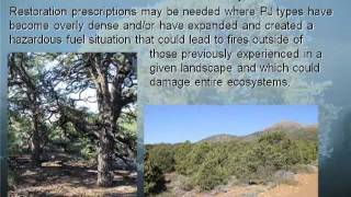 Silviculture for Pinyon-Juniper Ecosystems