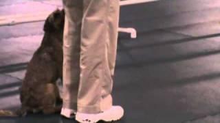 Miles Border Terrier Obedience
