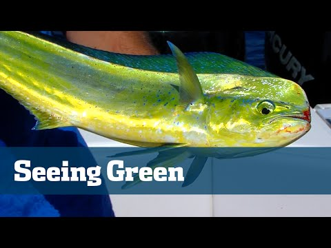 Florida Sport Fishing TV - Dolphin Fishing Tips Tackle Baits Preparation