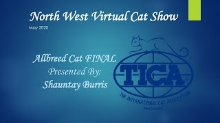 Northwest Virtual Cat Show - Allbreed Cat Final!