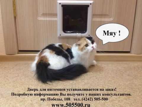 Каталог onliner. By это удобный способ купить корм для кошек. Характеристики, фото, отзывы, сравнение ценовых предложений в минске.