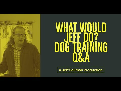 Teach a dog out | Stop dog barking | What Would Jeff Do? Dog Training Q&A #426
