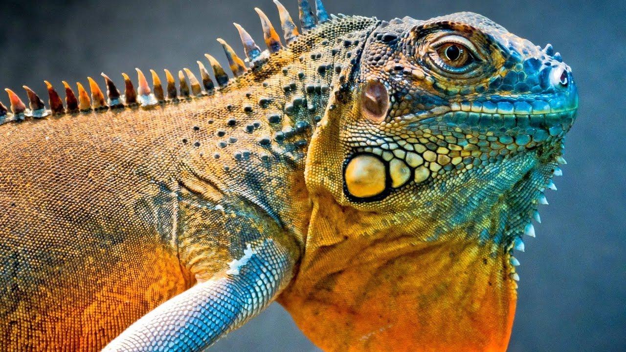 H D Reptiles Reptiles en HD Alta De...