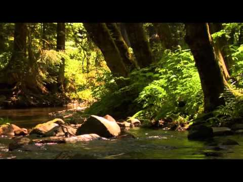 3 hour relaxing, peaceful, instrumental music by Tim Janis