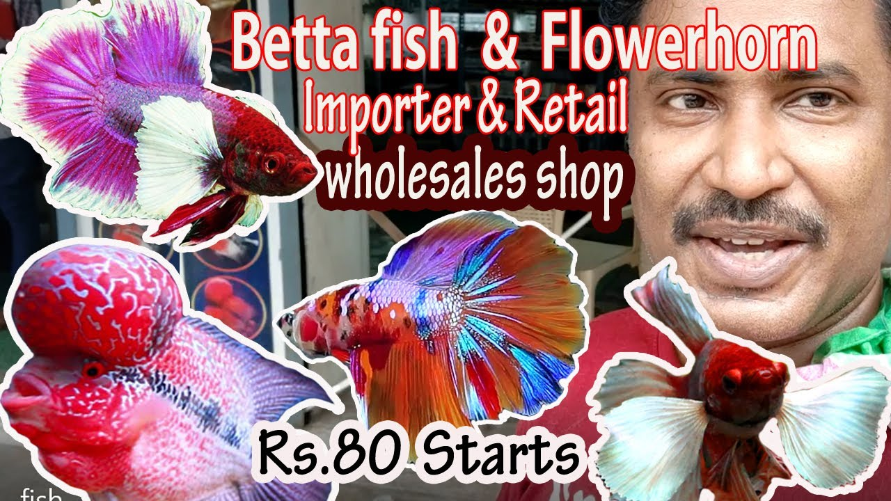 Whole Sale & imported Betta fish, flowerhorn LOW PRICE SHOP KOLATUR wholesale aquarium karthiks