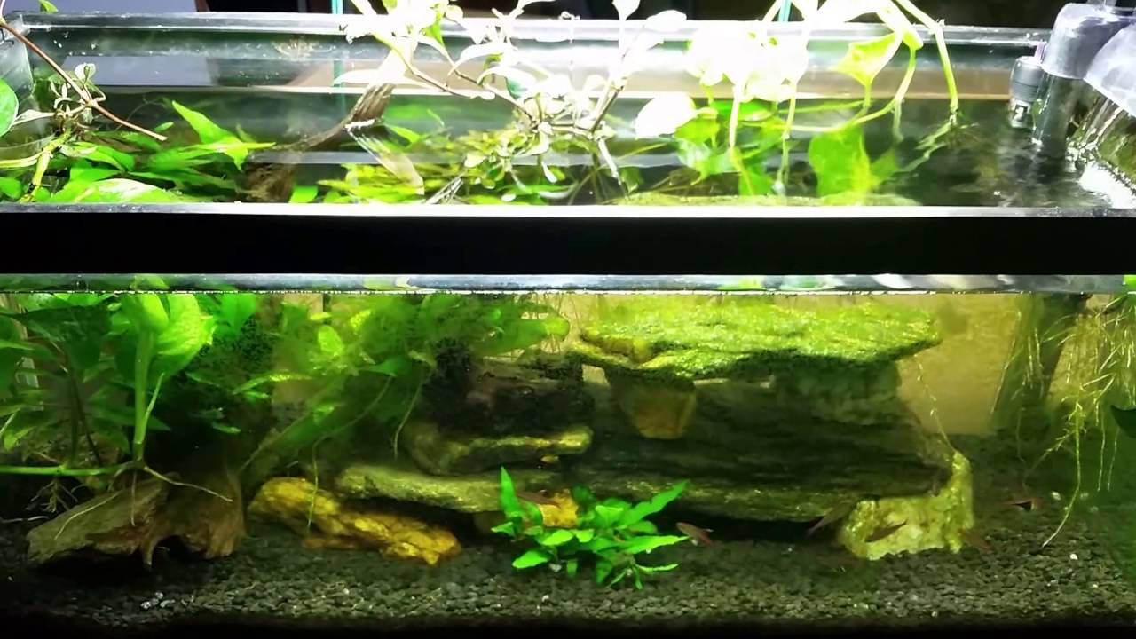 pothos plant and nitrates in your aquarium youtube