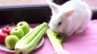 Мой кролик - ЧЕМ КОРМИТЬ КРОЛИКА? -  по запросу -