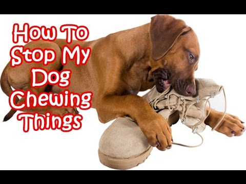 How To Stop My Dog Chewing Things Youtube