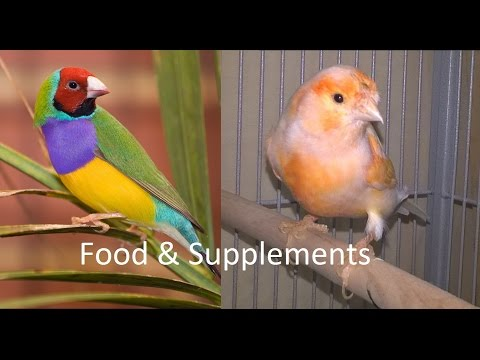 How to take care of Gouldian finches and Canaries. Food and supplements. Part 4