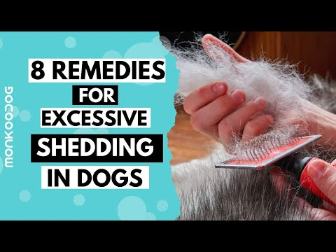 Reasons of HAIR SHEDDING in dogs . How to STOP Excess Shedding in dogs    Monkoodog