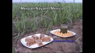 Repeat youtube video Homenaje a cañeros de Mexpan   Junio  2014 PRIMOVISION
