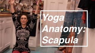 """Yoga ANATOMY Basics 6"": Scapula Movements- LauraGYoga"
