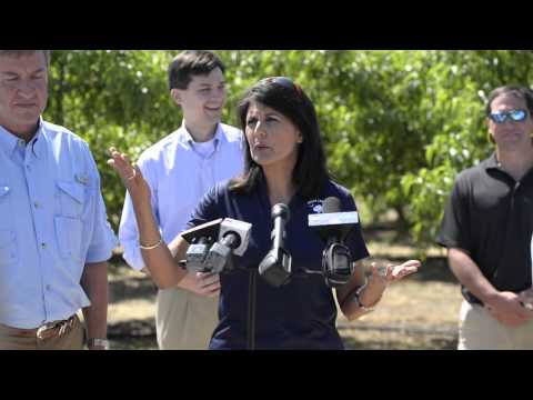 South Carolina Governor Nikki Haley talks about the peach crop.
