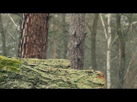 Drewno – ekologiczny, odnawialny surowiec opałowy