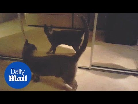 Hilarious moment cat notices reflection for the first time - Daily Mail