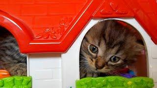 Маленький кошеня грає в будиночку для ляльок Нова стрижка Аліс Наші кошенята Відео для дітей про кошенят
