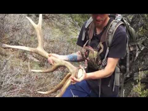 2016 Utah Wasatch Front Hard Core Elk & Moose Shed Hunting Part 2 ( The Match ) Brandon Pitcher
