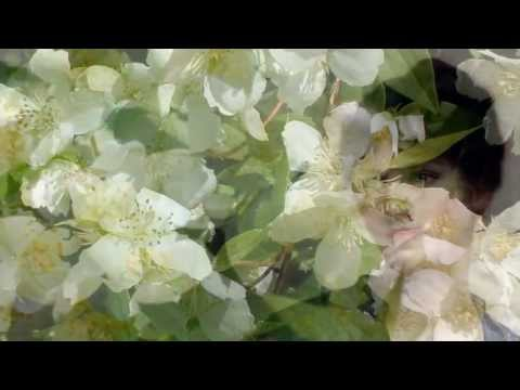 Жасмин (Jasminum). Описание, виды и уход за жасмином