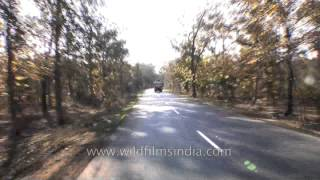 Driving towards Kanha - Madhya Pradesh