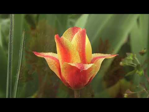 Grow Something Lovely    Enjoy Gardening   relaxing hobby