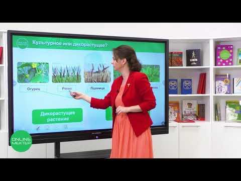 1 класс. Естествознание. 3 урок. Какие бывают растения?