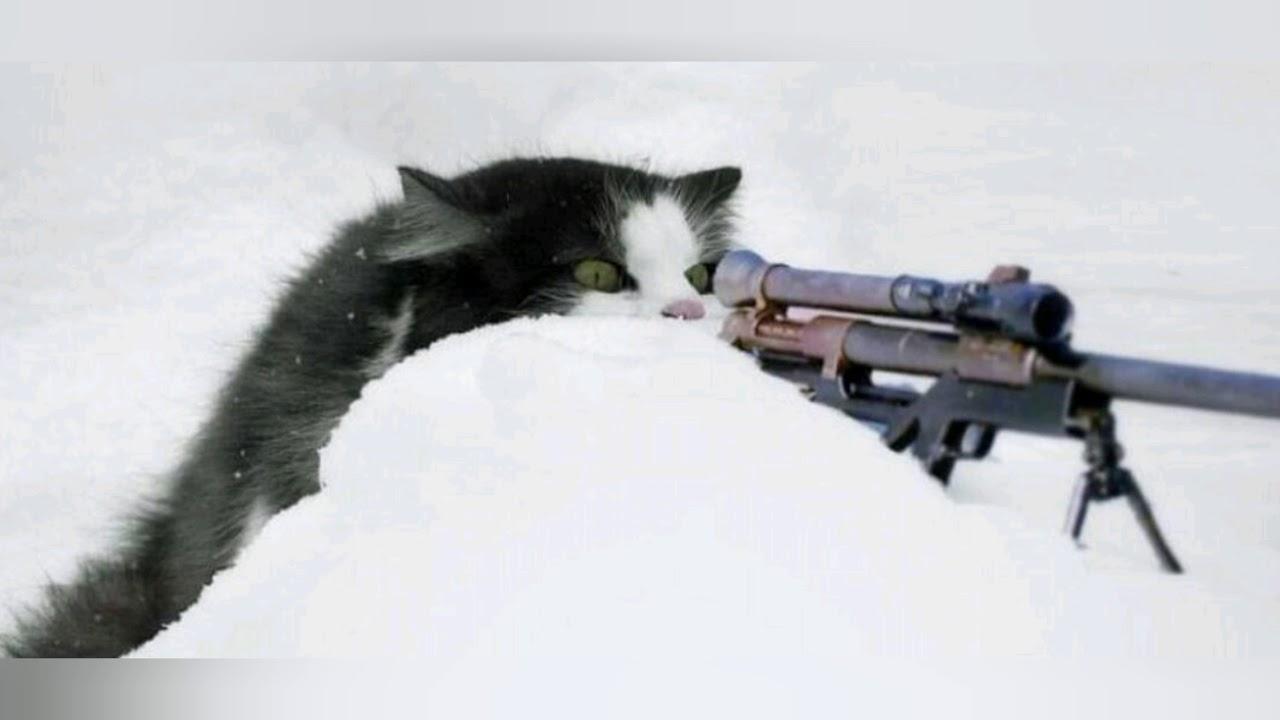 Фото кота с оружием